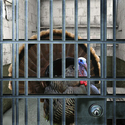 Thanksgiving turkey in jail